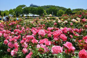 【花フェスタ記念公園】春のバラまつり @ バラと花のテーマパーク 花フェスタ記念公園 | 可児市 | 岐阜県 | 日本