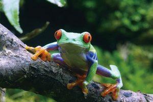 【アクア・トト ぎふ】企画展「美しきカエルの世界」 @ アクア・トト ぎふ