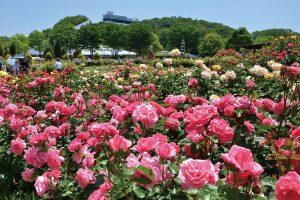 【花フェスタ記念公園】春のバラまつり @ 【花フェスタ記念公園】春のバラまつり