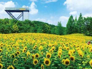 【花フェスタ記念公園】キッズサマー2019 @ 花フェスタ記念公園