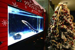 【アクアトトぎふ】クリスマス特別水槽が登場! @ アクア・トト ぎふ