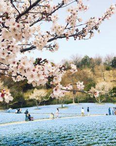 【花フェスタ記念公園】スプリングフェア @ 【花フェスタ記念公園】スプリングフェア